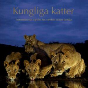 Kungliga Katter - Beteenden Och Signaler Hos Världens Största Kattdjur